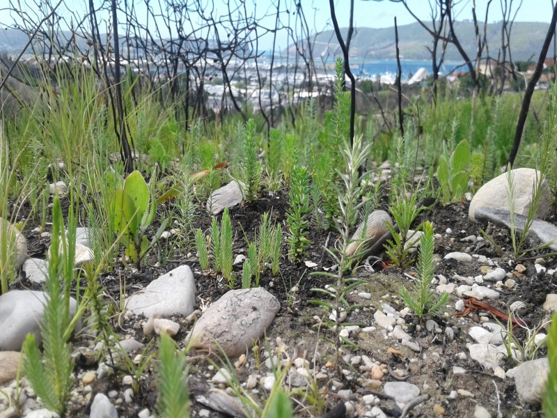 Pledge Nature Reserve - Knysna